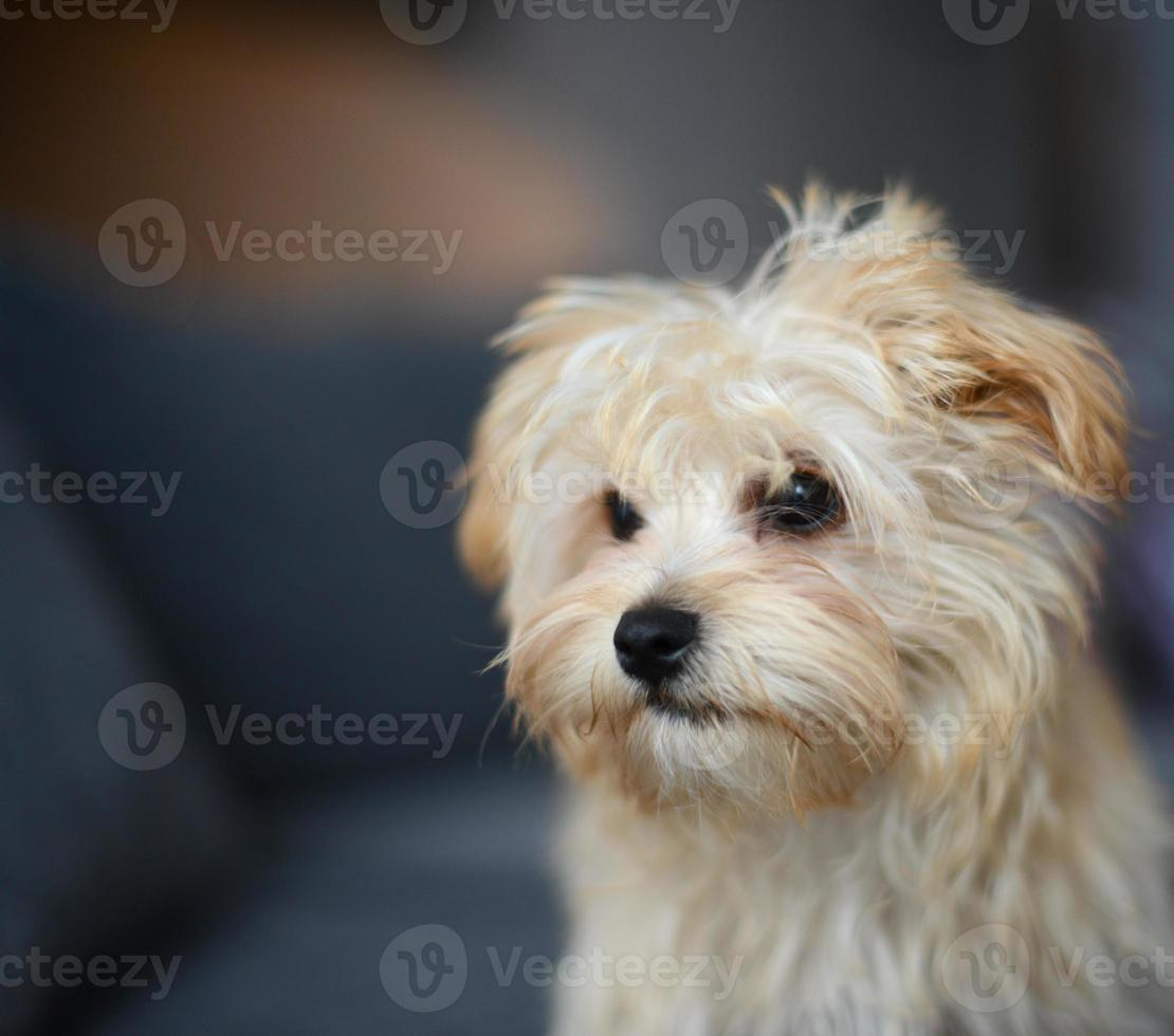 lindo cachorro foto