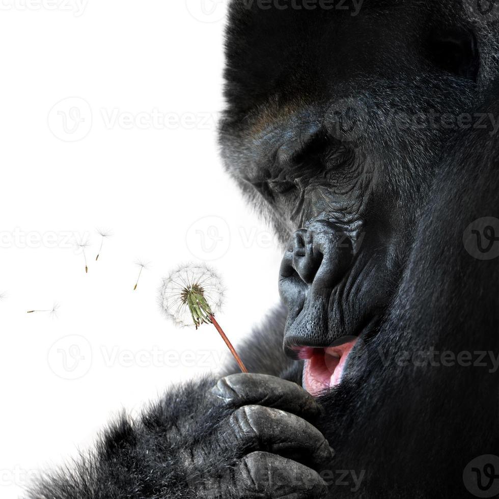 Cute animal portrait of an ape making a wish photo