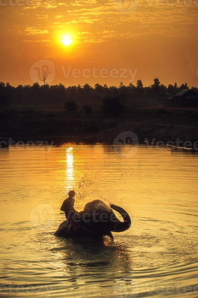 mahout clearing photo