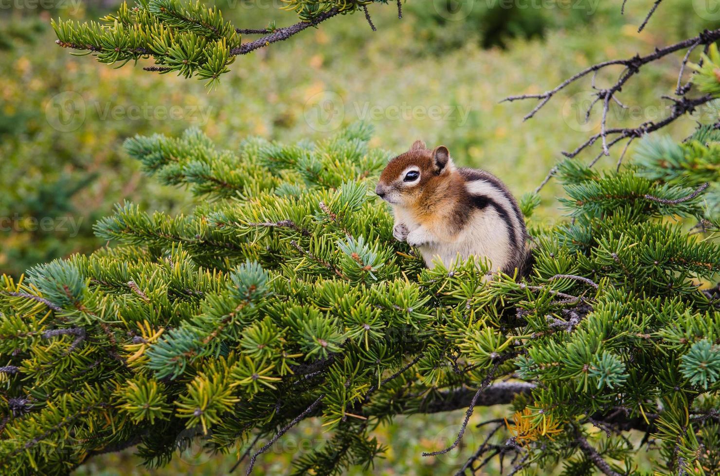 pequeña ardilla sentada en un árbol verde foto