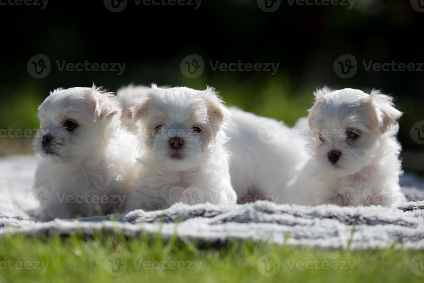 cuatro lindos cachorros foto