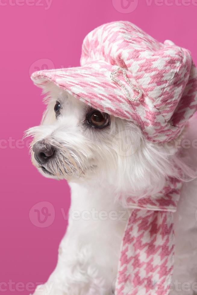 perro esponjoso vistiendo moda de invierno foto