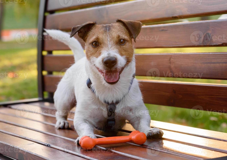 sonriente lindo perro con hueso foto