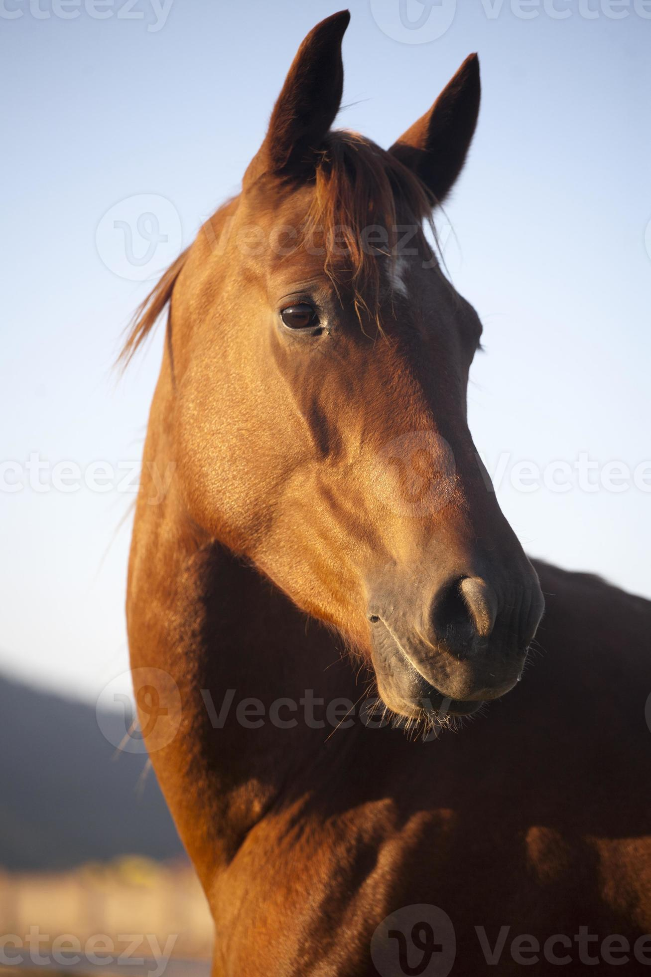 Peaceful Mare Horse Head Shot Side View Summertime Stock Photo