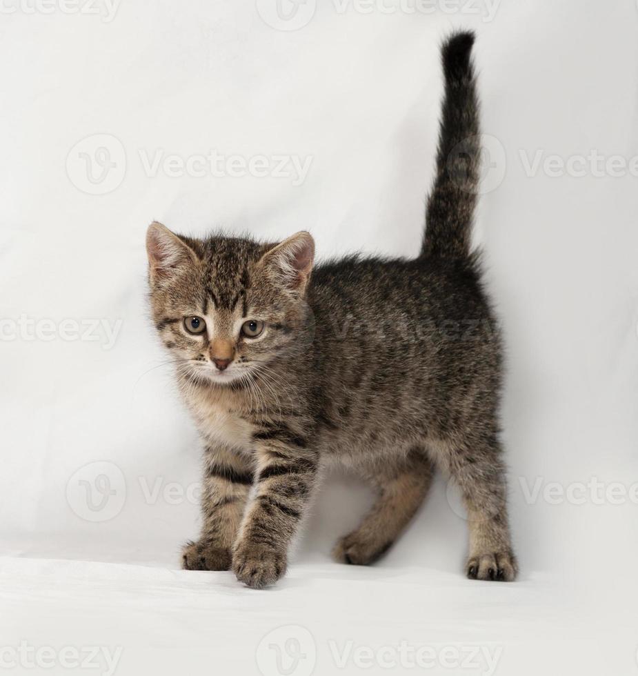 gatito rayado va en gris foto