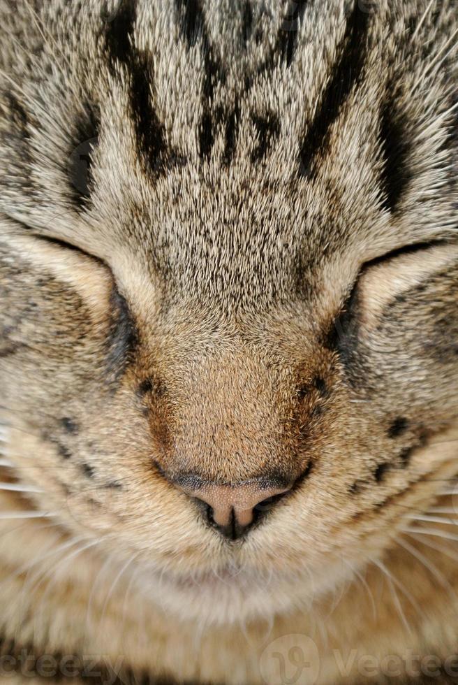Close-up Cat photo