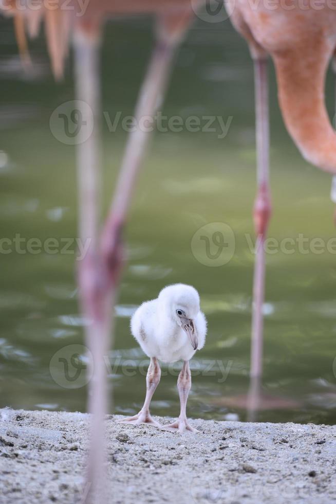Flamingo baby photo