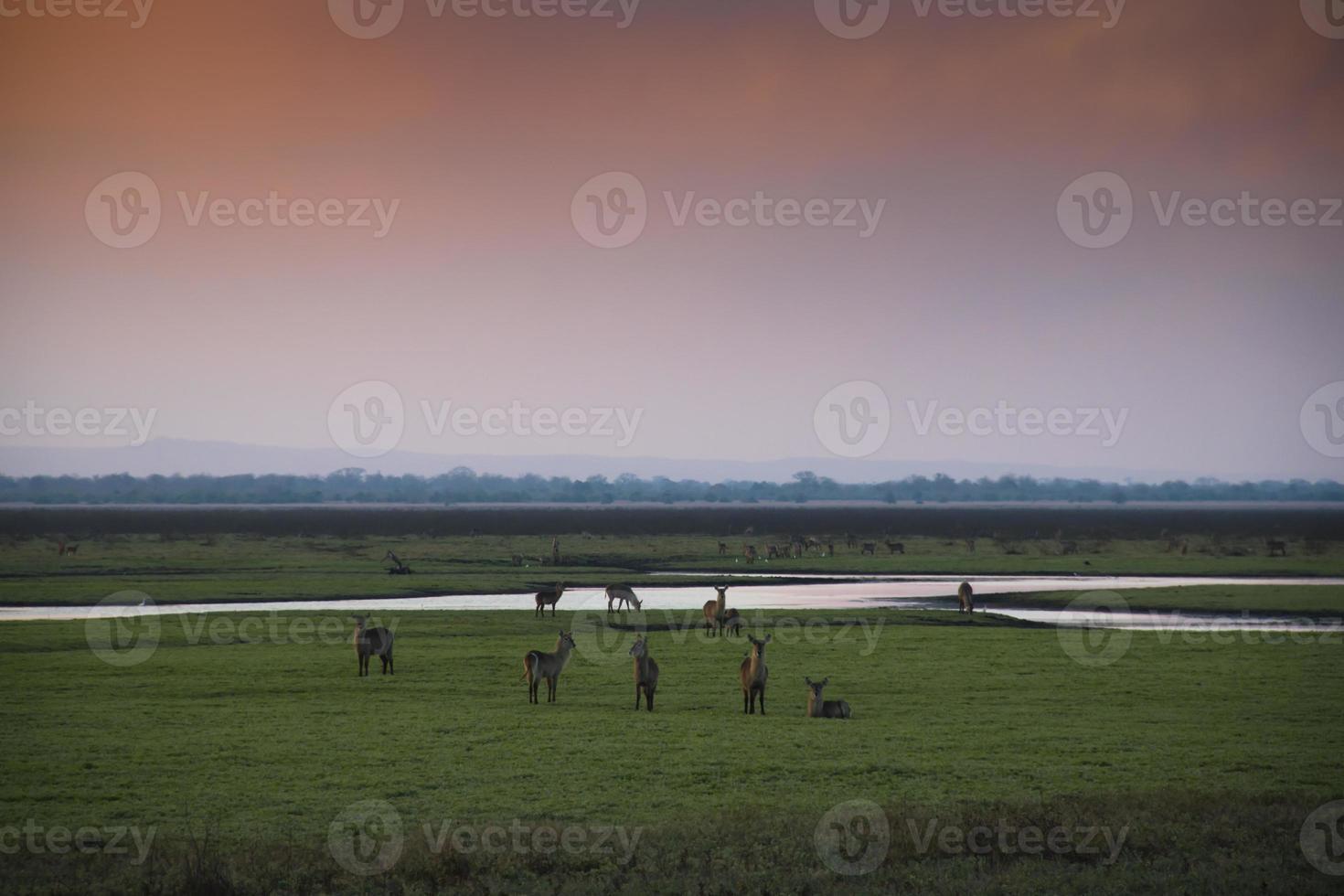 puesta de sol sobre el parque nacional gorongosa foto
