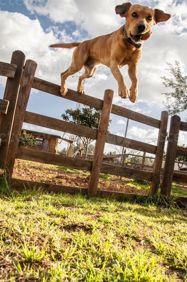 perro saltando foto