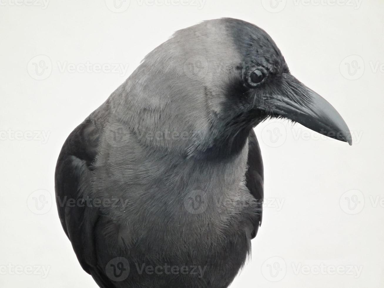 pájaro curioso foto