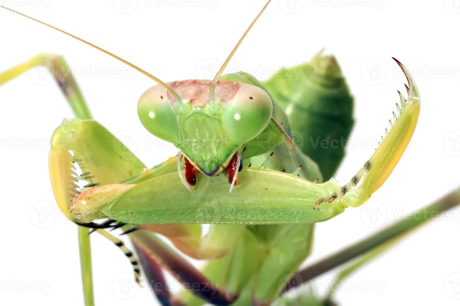 mantis preparando armas foto