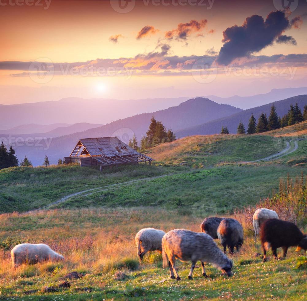 colorido atardecer de verano en las montañas de los Cárpatos foto