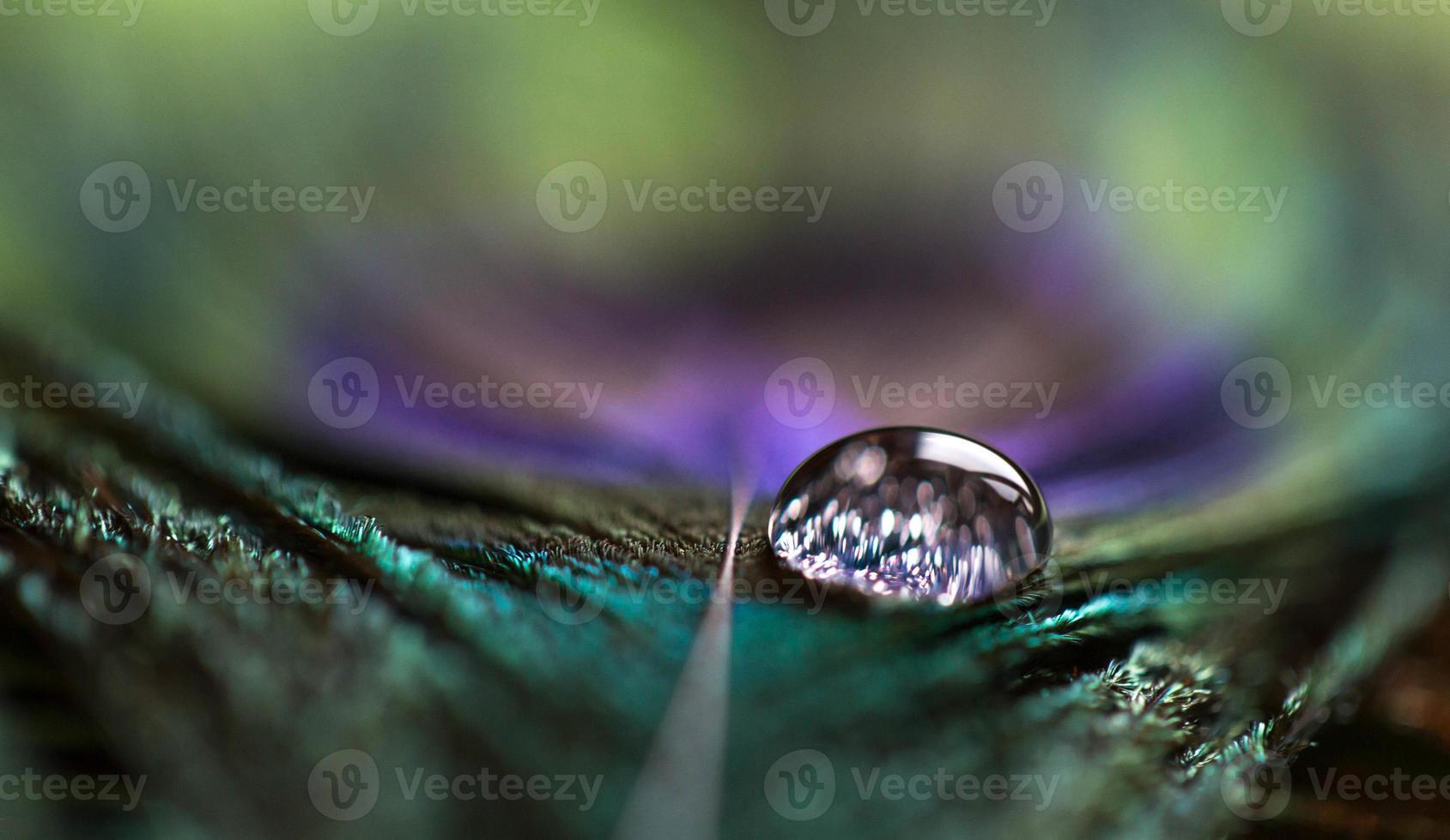 gota de agua sobre plumas de pavo real foto