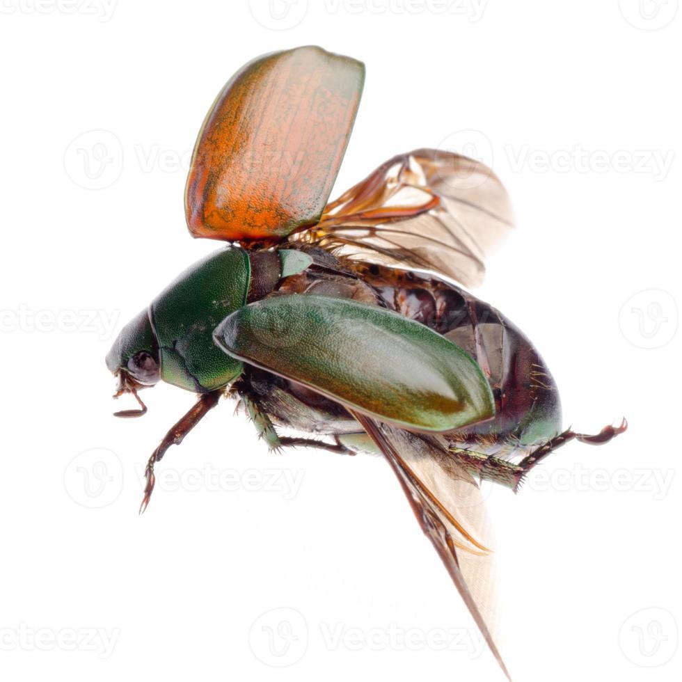 escarabajo escarabajo insecto volador foto