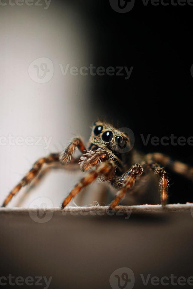 pequeño escarabajo macro foto