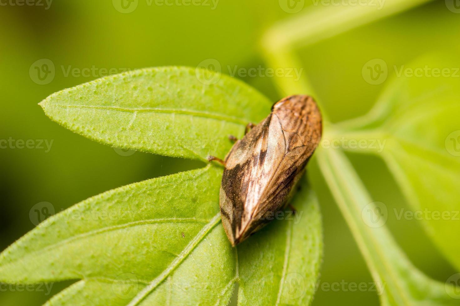 primer insecto en la naturaleza salvaje foto