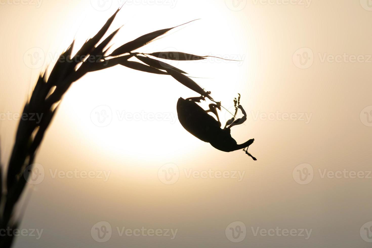 Cerca del escarabajo sentado en la planta foto