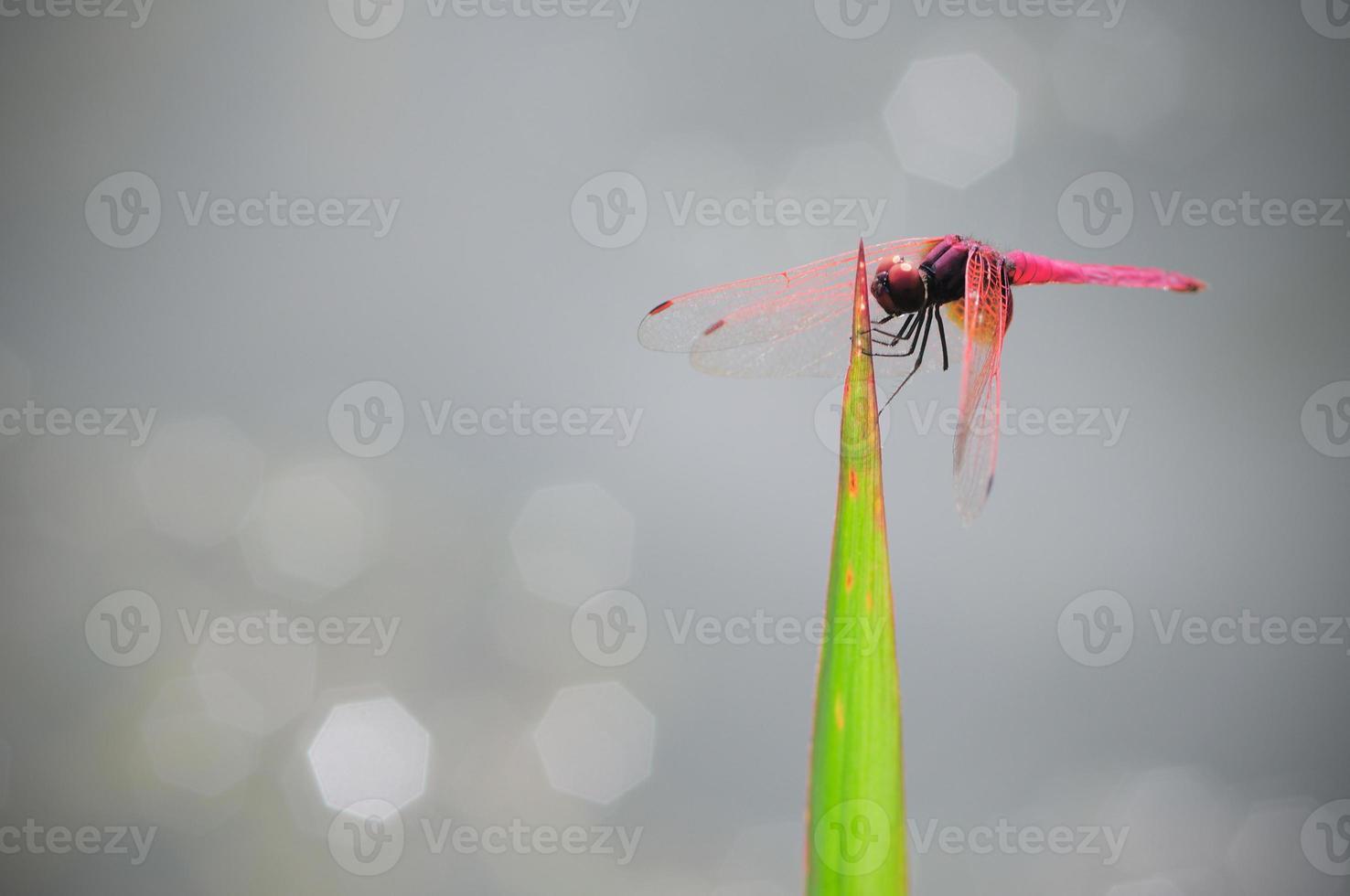 libélula al aire libre foto