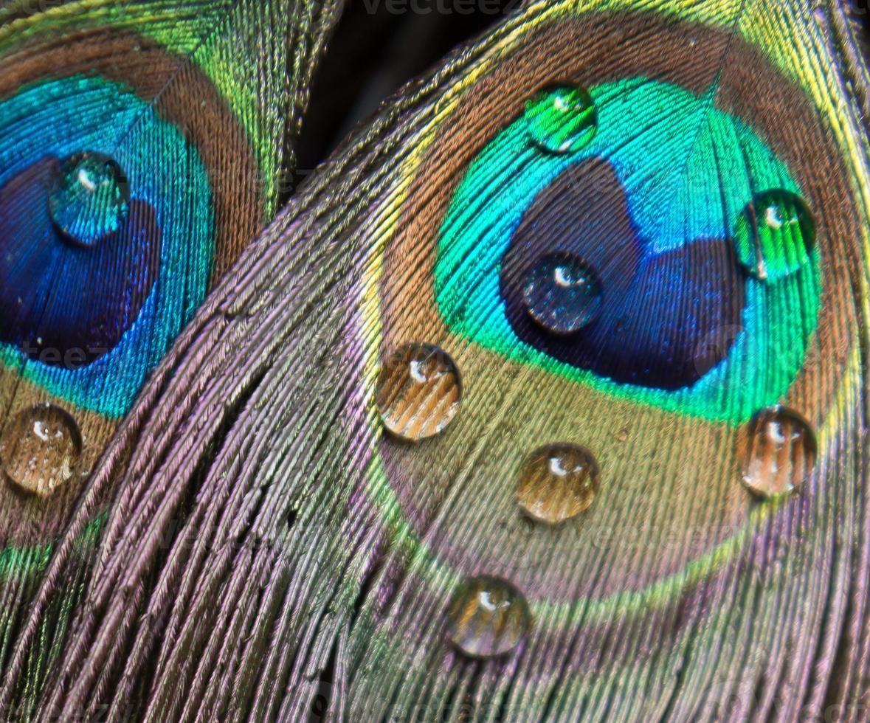 resumen de pavo real foto