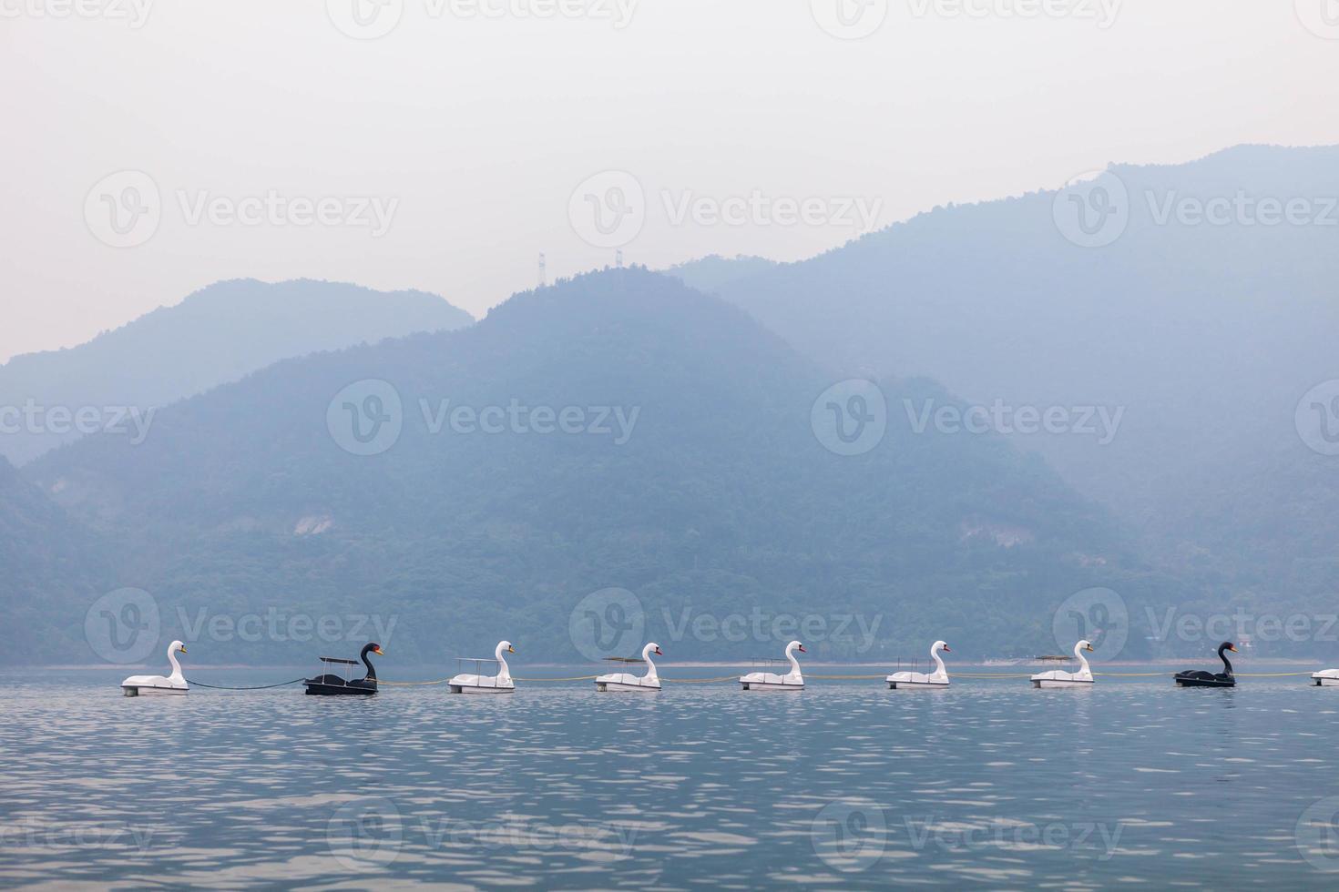 Swan Boats photo