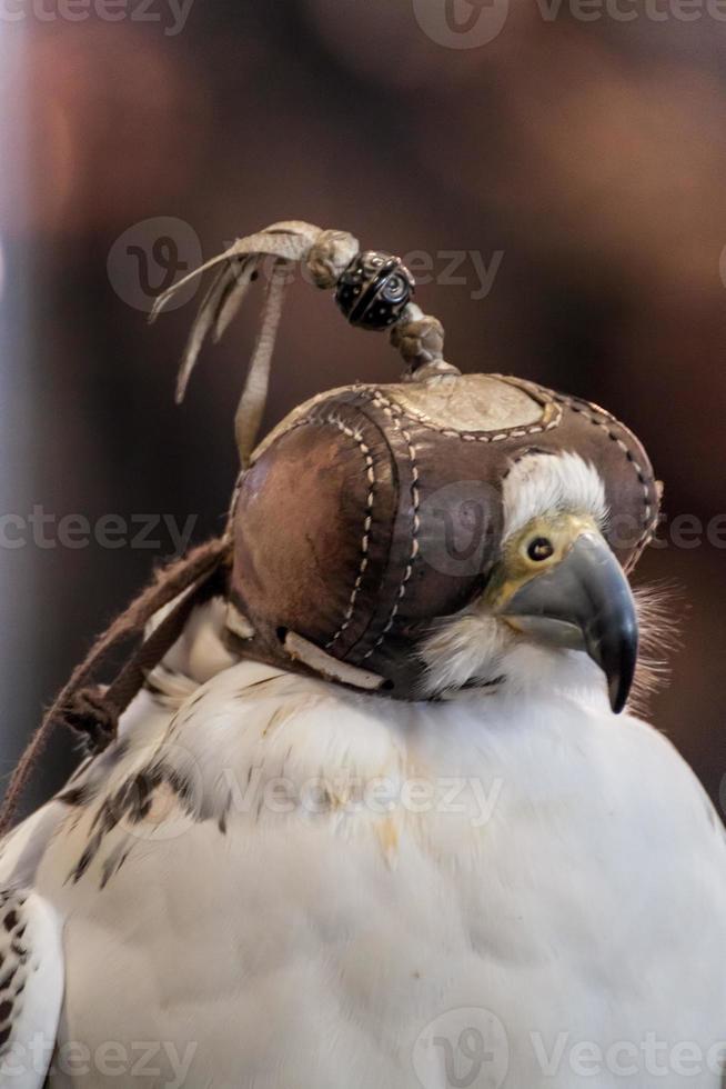 halcón con los ojos vendados foto