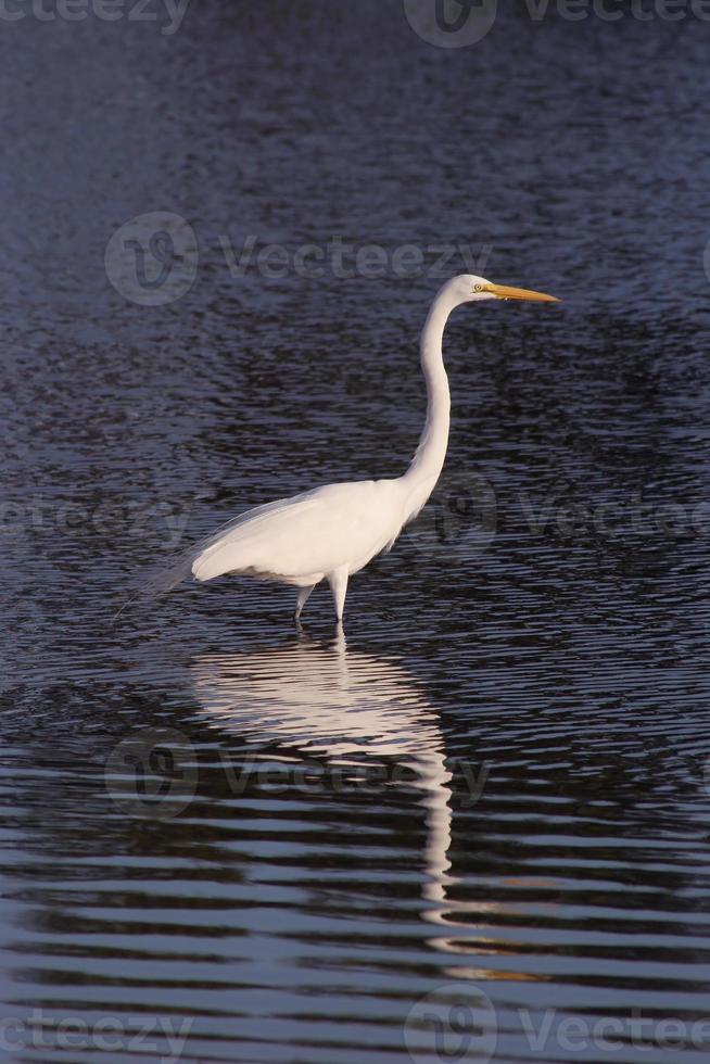 grúa blanca en reflejo de ondulación foto