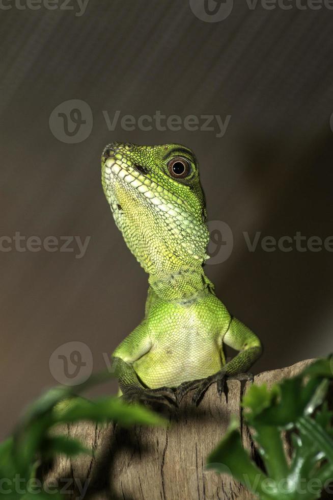 dragón de agua chino foto