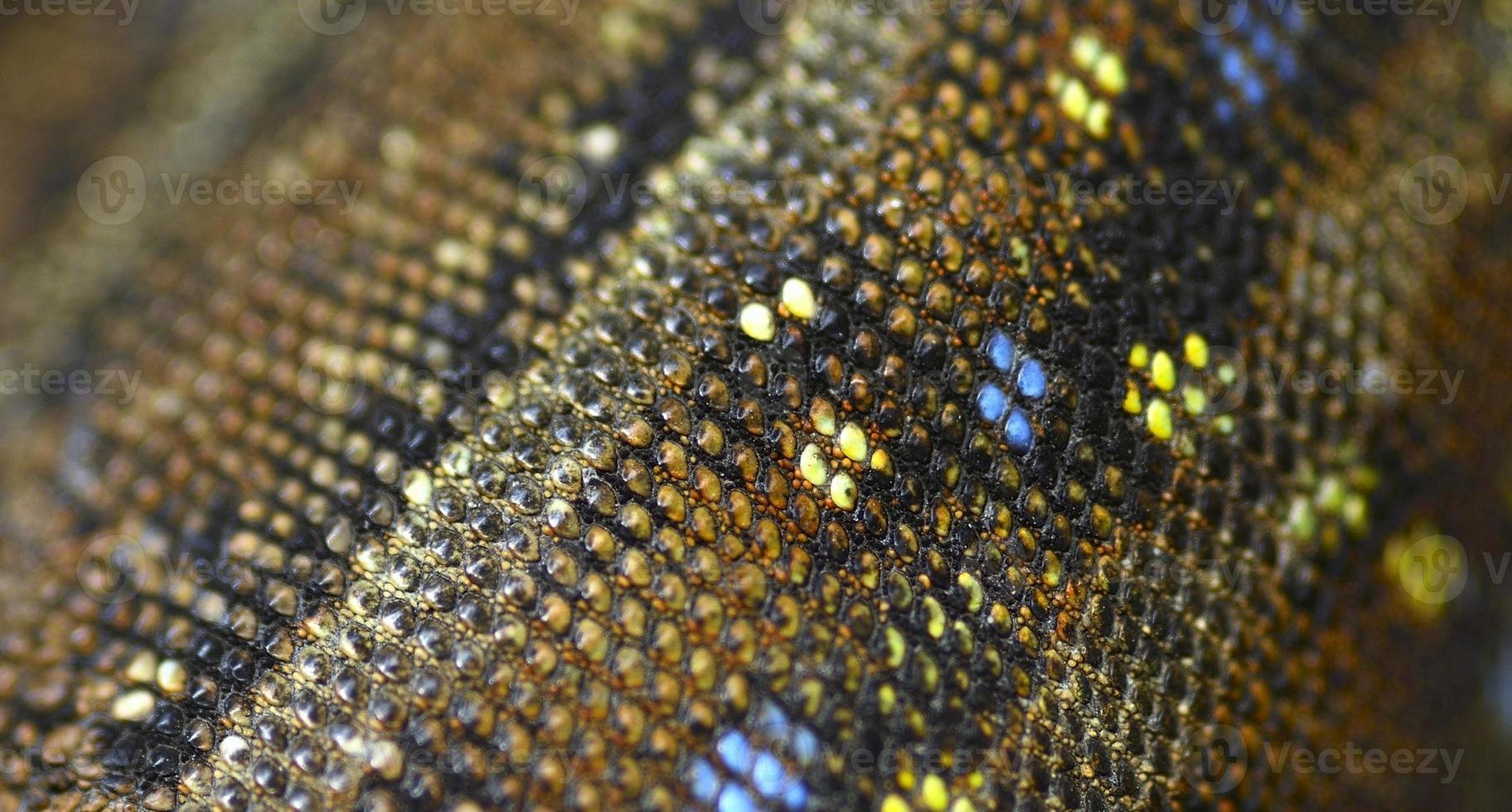pele de lagarto foto