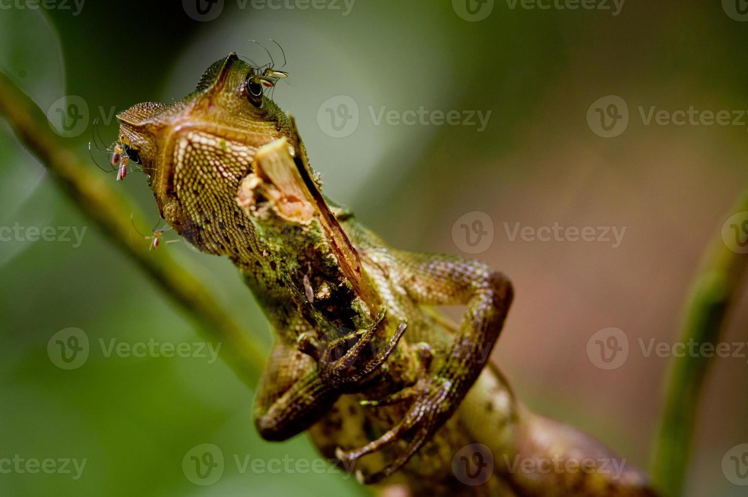 lagarto en árbol foto