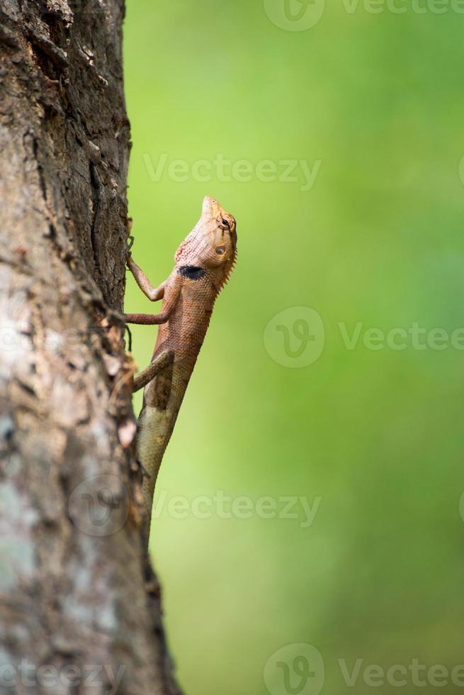 lagarto amarillo en el árbol foto