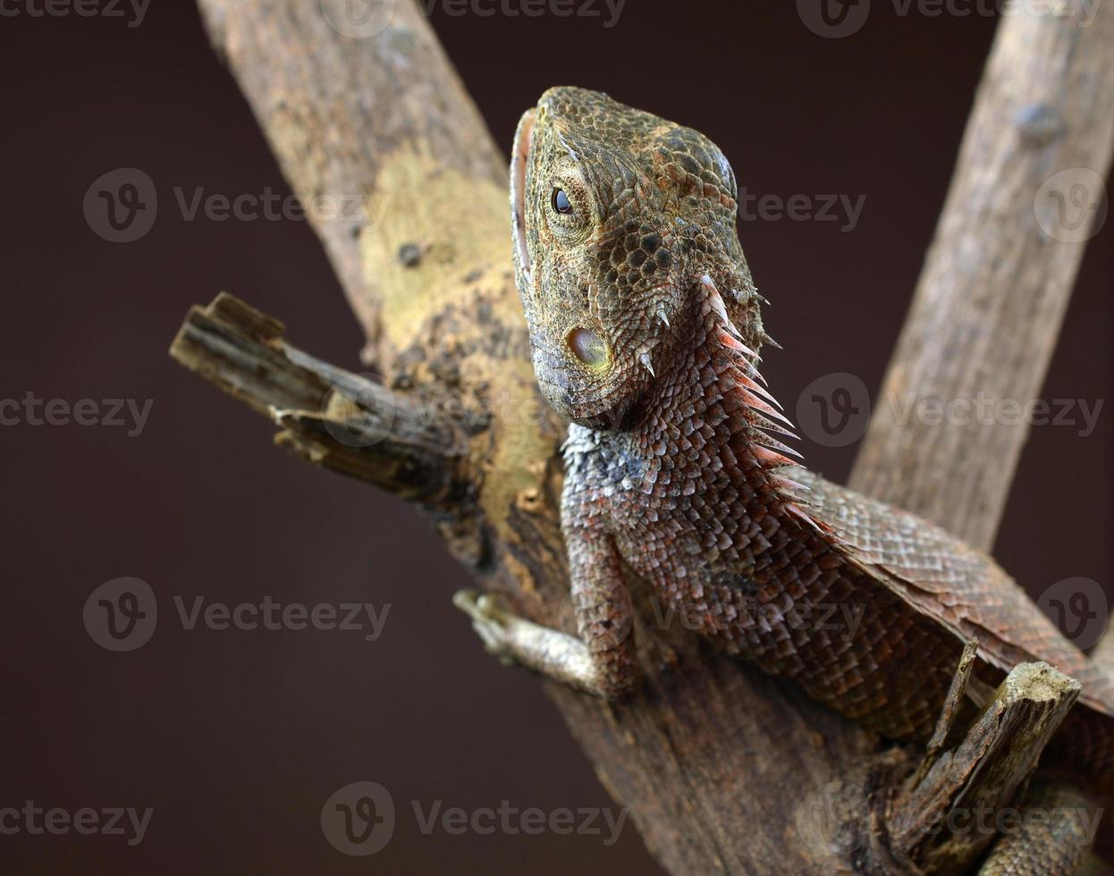 lagarto posado en el árbol foto