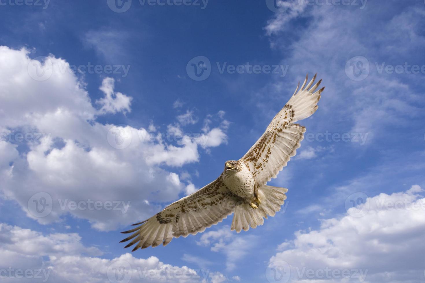Hawk flight photo