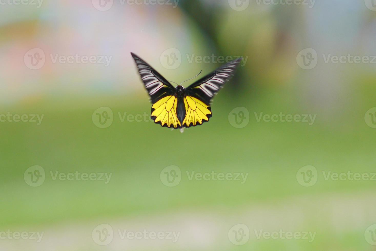 mariposa no.3 foto