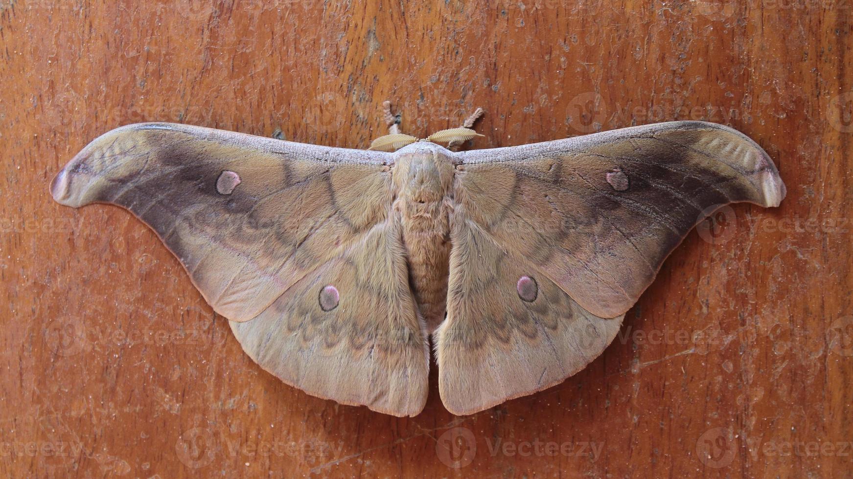 color marrón mariposa foto