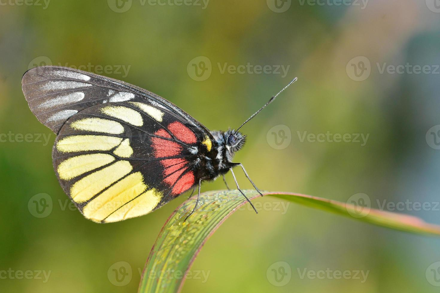 Yellow butterfly photo
