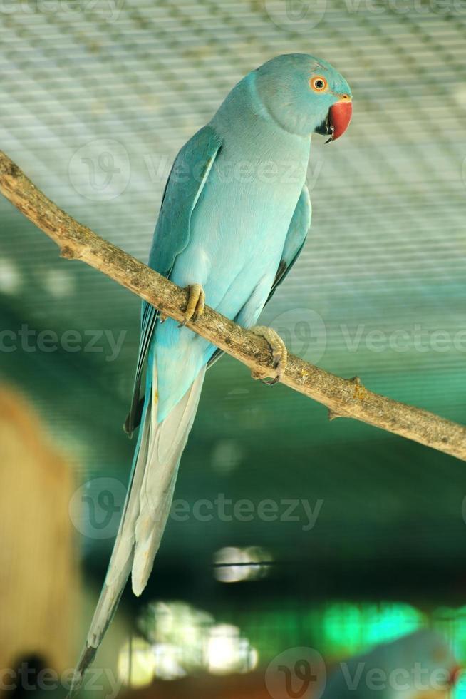 Green parrot photo
