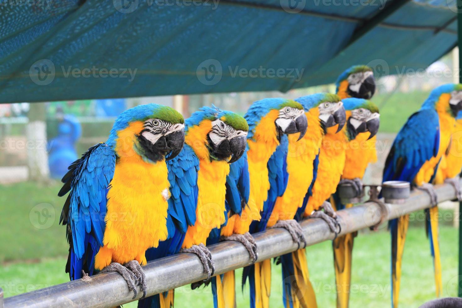 parrot macaw photo