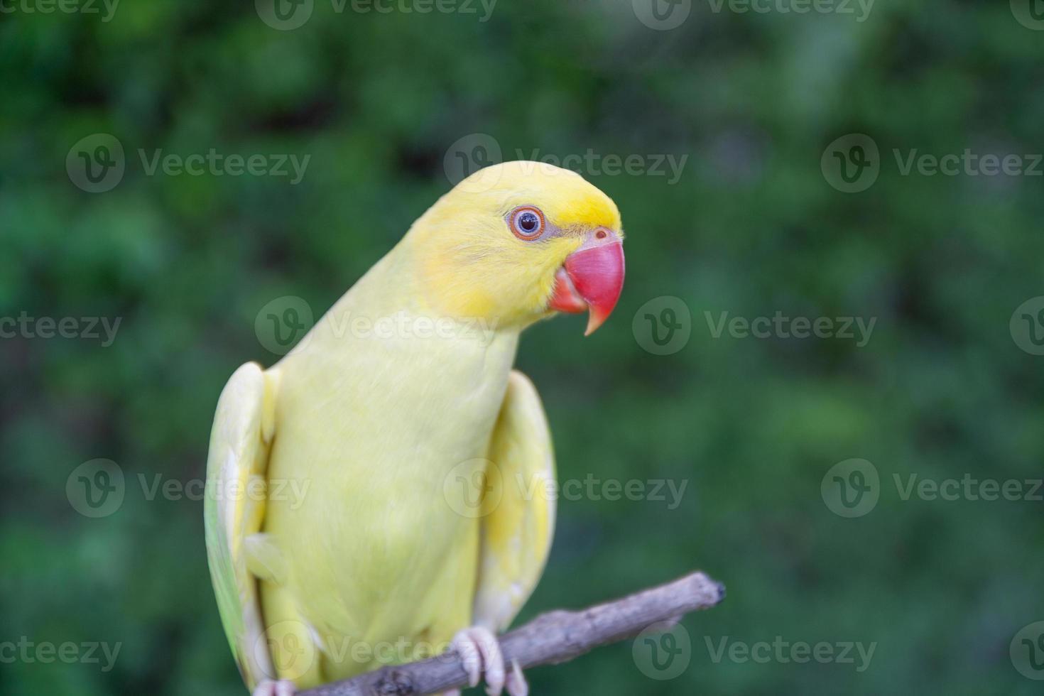 oiseau perroquet assis sur le perchoir photo
