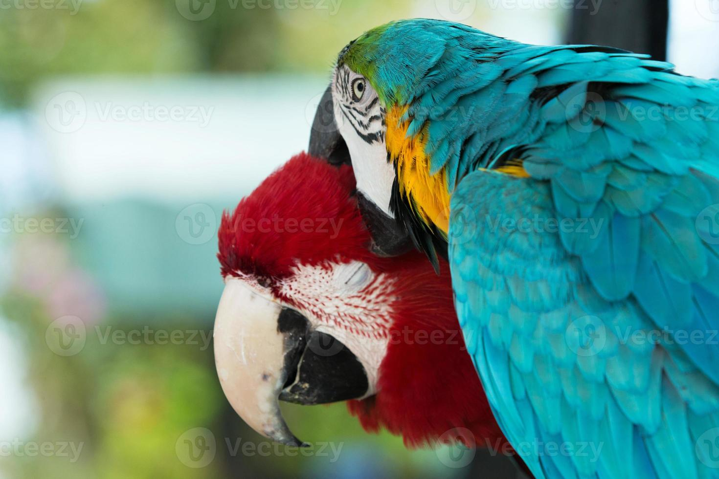 papegaaien foto