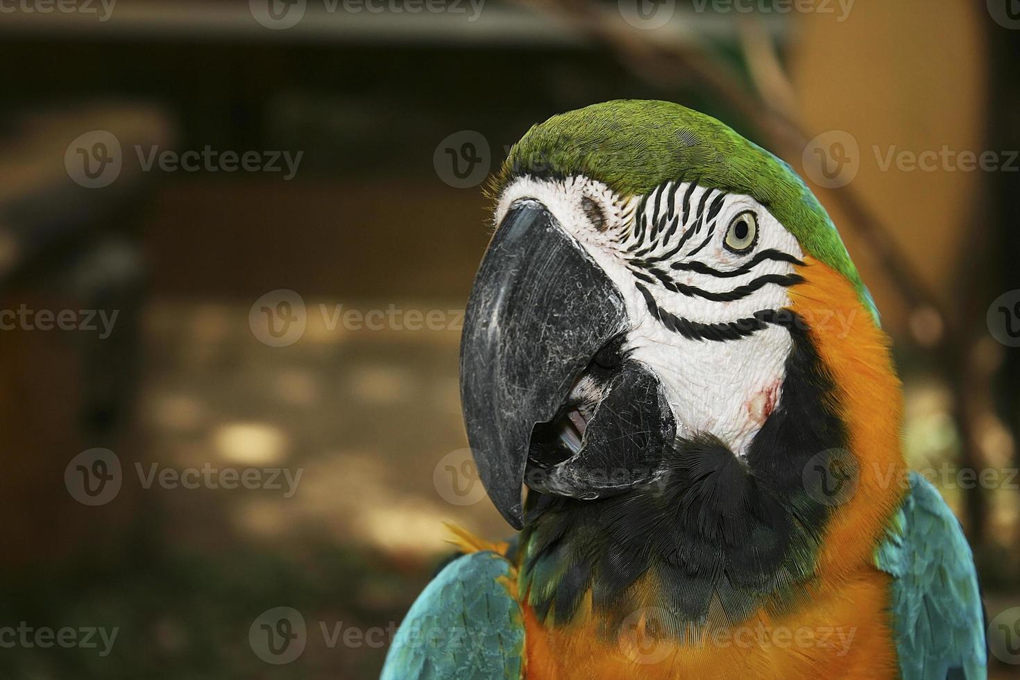 pájaros loro foto