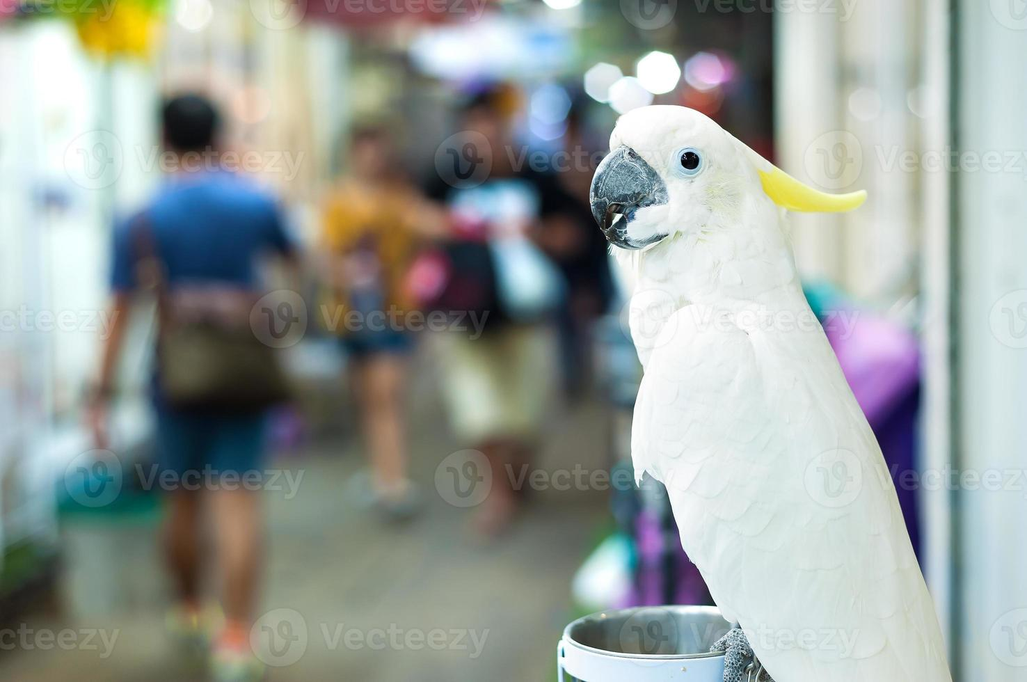 Cacatúa blanca perchando en el mercado Chatuchak, Bangkok, Tailandia foto