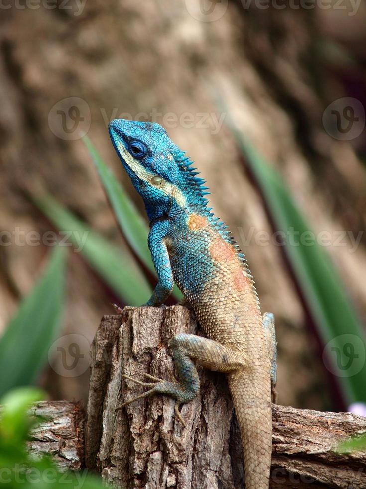 camaleón escalando en madera foto