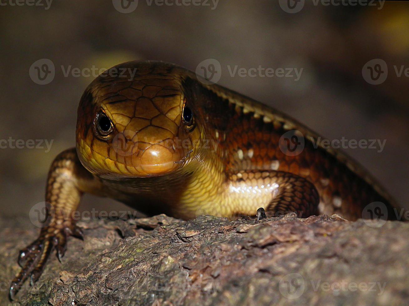 las poses de iguana foto