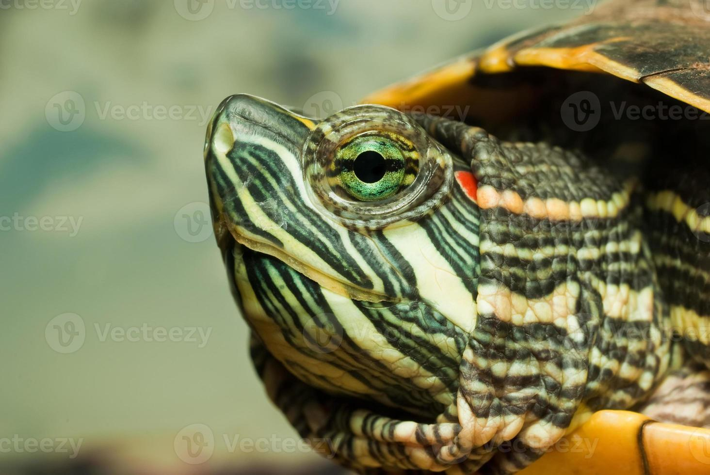 tortuga reprendida foto