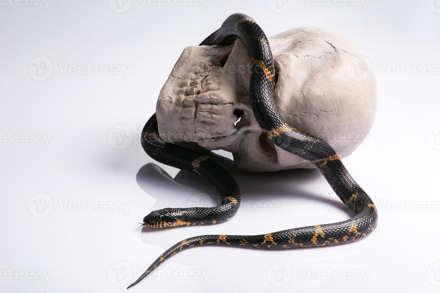 reptiles sobre fondo blanco foto