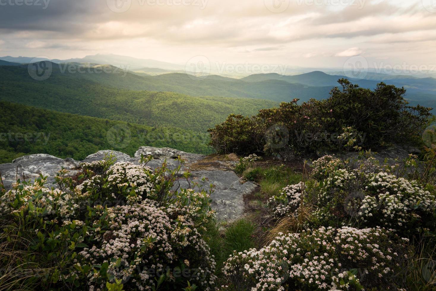Hawksbill in Bloom photo