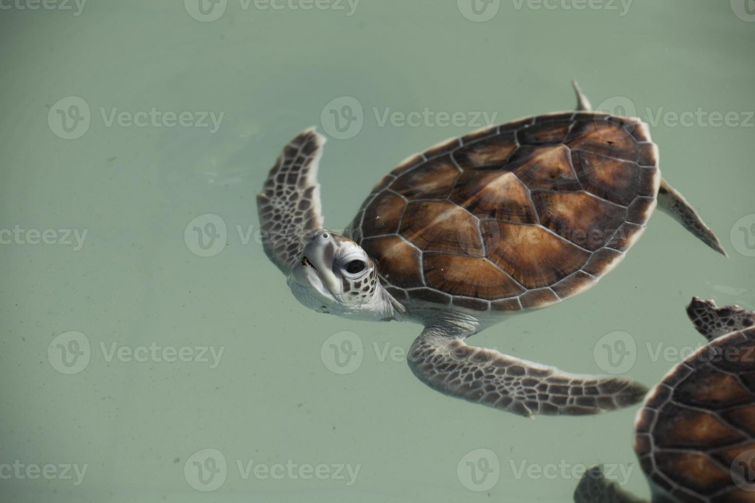 tortugas bebé foto