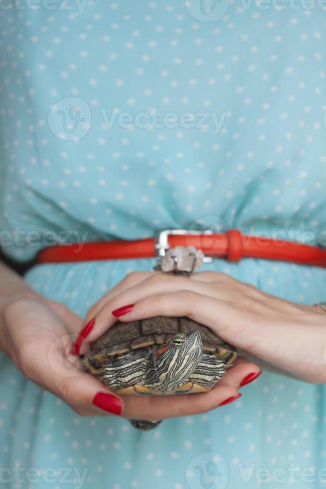trachemys scripta. tortuga de orejas rojas de agua dulce en manos de mujer (s foto