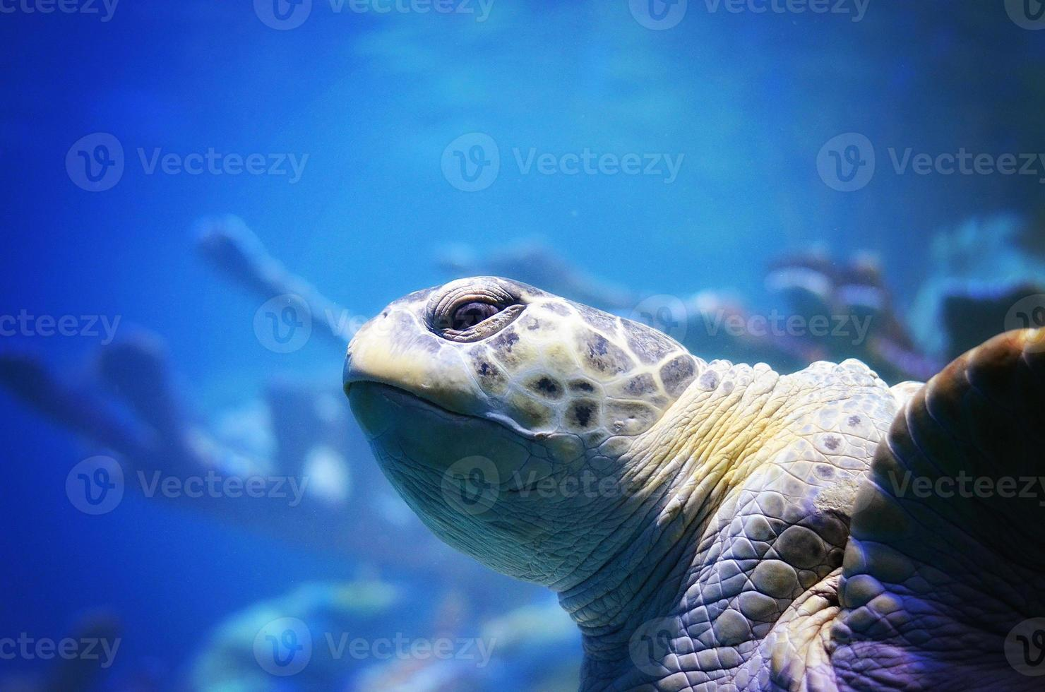 Blue and turtle photo