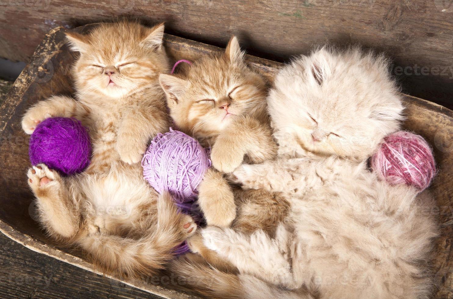 kittens   sleeping photo